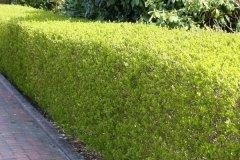 vorfreude-auf-eine-schoene-gruene-mauer