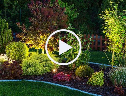 Hier finden Sie die aktuellsten Videos zum Thema Garten