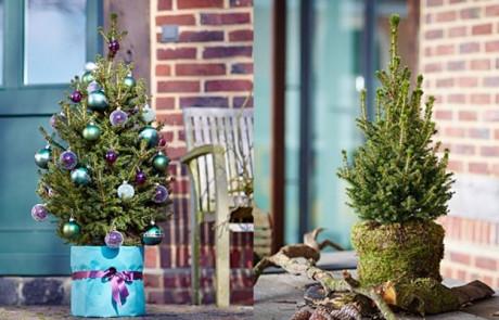 Neuer Christbaum oder Gartenpflanze