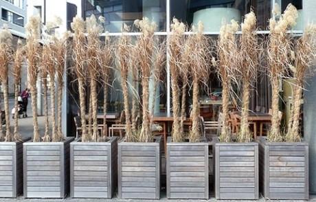 Winterschutz für heiklere Pflanzen