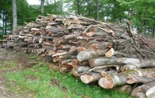 Vom Nebenprodukt zum Motor der Waldbewirtschaftung