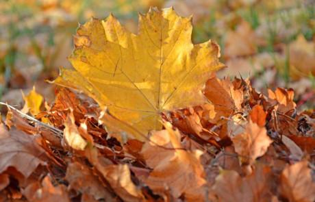 Blätterfall im Herbst