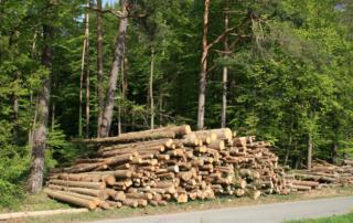 Jetzt das Holz nutzen, das bereits vorhanden ist