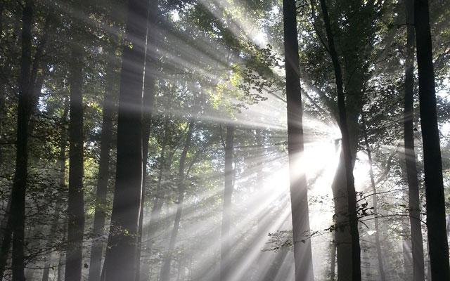 Neues Förderprogramm Holzheizungen