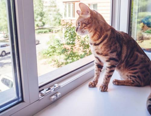 Der Stubentiger will nach draussen – Türchen, Leiter oder Netz, was ist in einer Mietwohnung erlaubt?