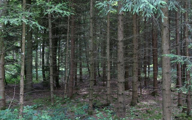 Holzenergie fördert Biodiversität