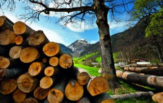 Holzenergie: Schallmauer von 5 Mio. m³ durchbrochen