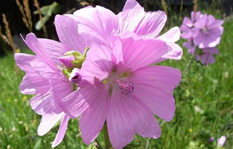 Einheimische Wildpflanzen liegen im Trend