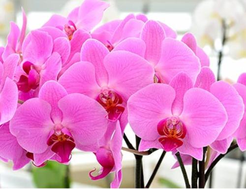 Bezaubernde Orchideen