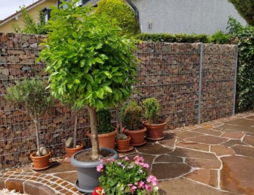 Garten wirksam gegen Lärm schützen