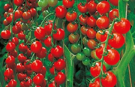 Gemüse veredelt
