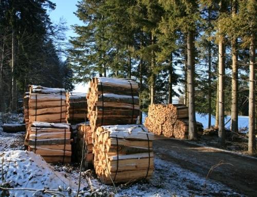 Energieholz: Nutzen oder im Wald stehenlassen?