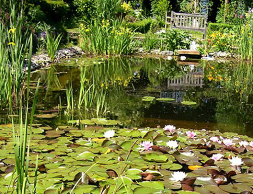 Klares Wasser im Gartenteich