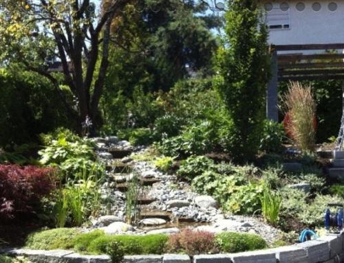 Mantis Gartenbau: Wir bauen nicht nur Gärten – wir gestalten sie