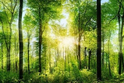WWF kann gegen Bewilligung von Pestiziden Beschwerde erheben