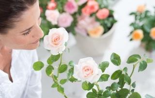 Wege ins Rosenparadies
