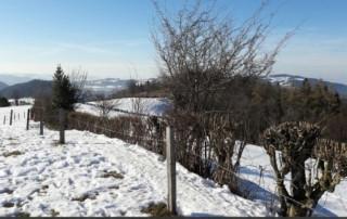 Im Winter richtige Heckenpflege