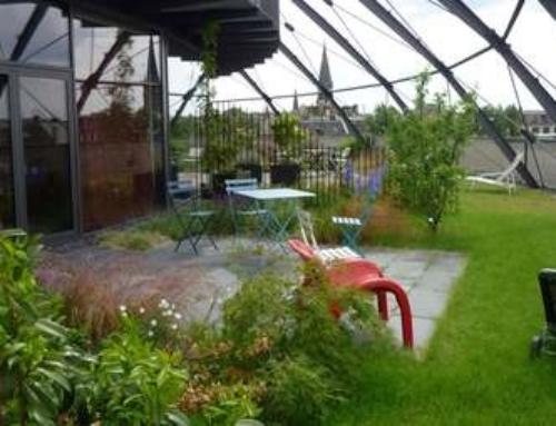 Ein Gründach lohnt sich auch für private Bauherren
